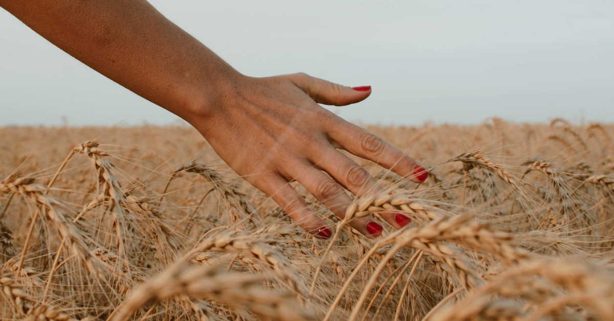 Woman's hand in wheat field