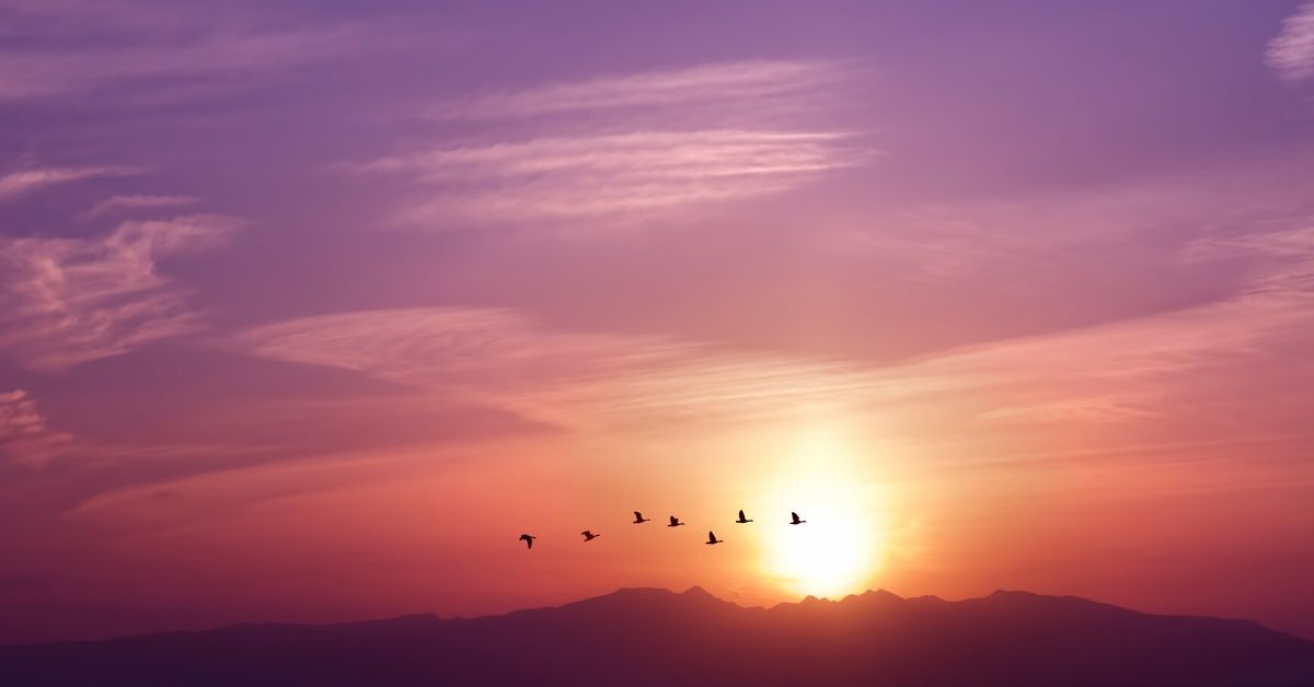 photo of birds flying in a sunset sky